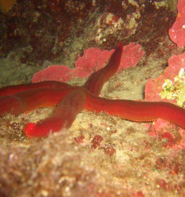 Мальта – под водой
