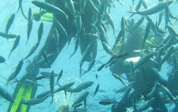 Мальта – кормление рыб