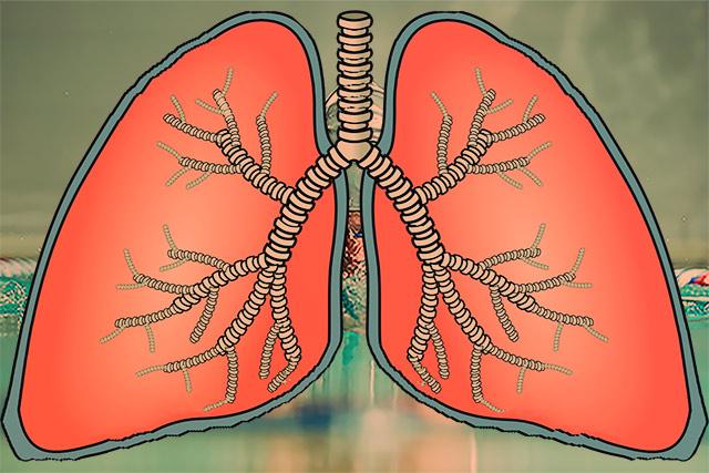Дыхание и фридайвинг